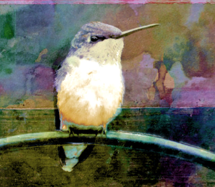 art quilts, quilting, quilts, hummingbird, free motion quilting, patterns, sue freebern designs